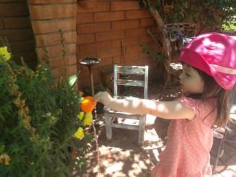 phoenix_watering_plants