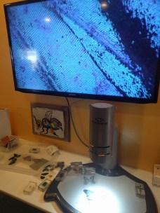 santa_rosa_bee_microscope