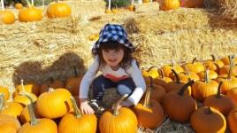pumpkin_patch_1