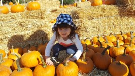 pumpkin_patch_1