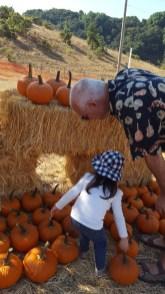 pumpkins_with_grandpa
