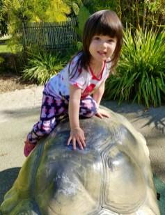 turtle_climbing