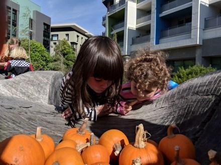 halloween_pumpkins_brooke_cecilia