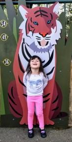 oakland_zoo_tiger_cutout