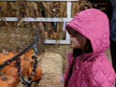 pumpkin_patch_hood