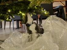 white_oak_marley_under_tree_2