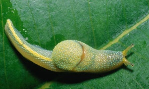 Slugs are sexier than ninjas.
