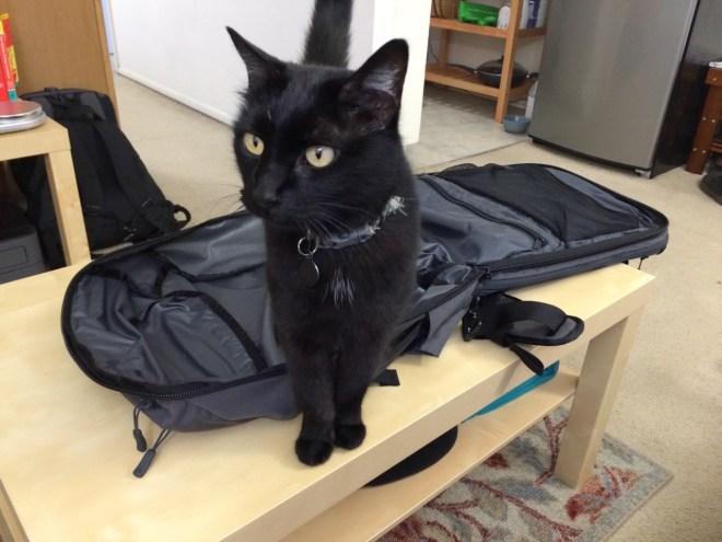 Kitty loves backpack