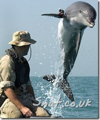Dolphin - The war against Terror