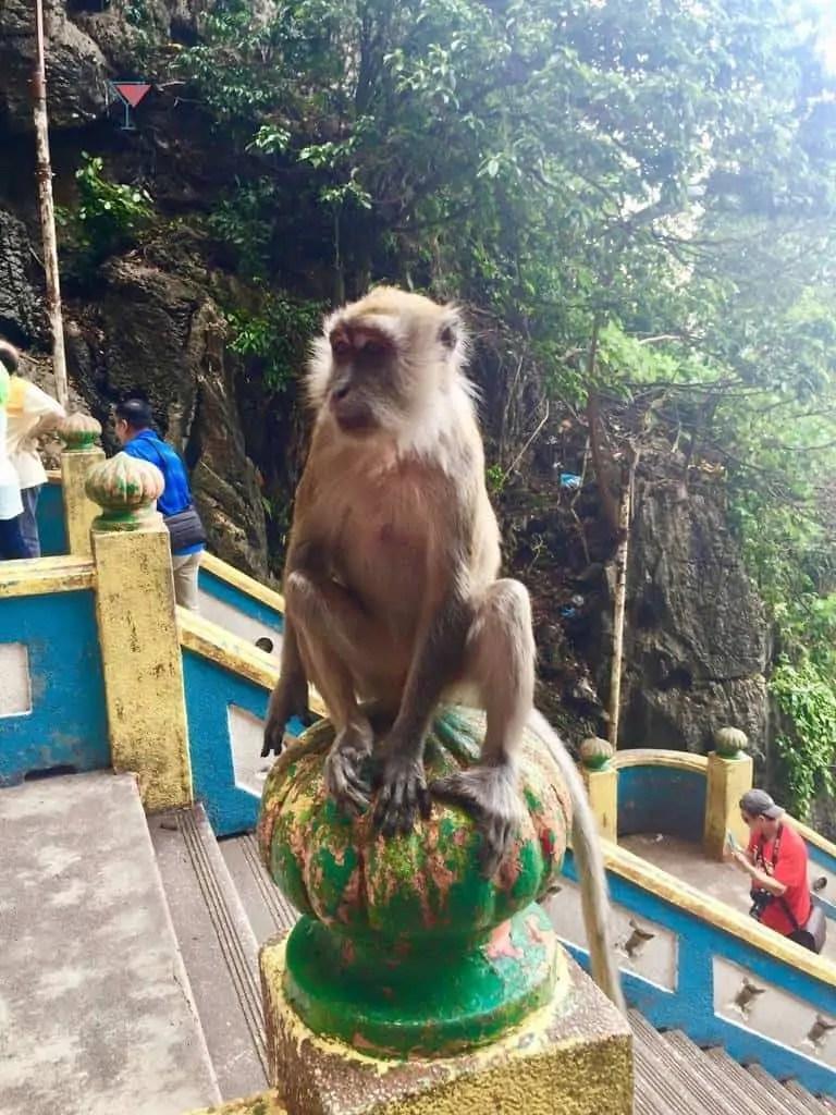 monkey sitting on pillar wth trees