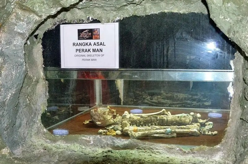 skeleton in museum