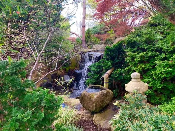 Hobart botanical gardens