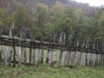 Ваљевска Грачаница - Слика 08