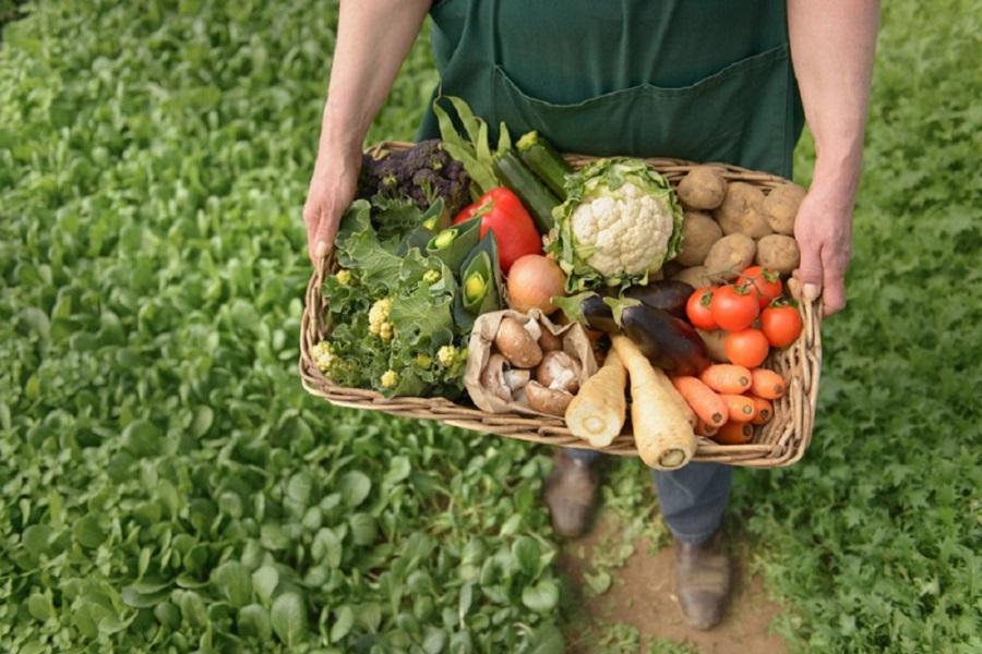 Poljoprivreda subvencije