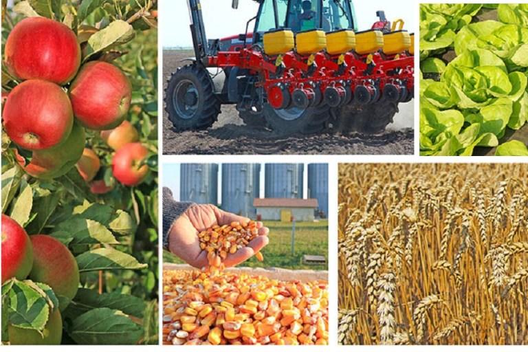 Read more about the article Konkurs za dodelu sredstava za sufinansiranje investicija u fizička sredstva poljoprivrednih gazdinstava u sektoru voće, povrće (uključujući I pečurke), cveće i ostali usevi