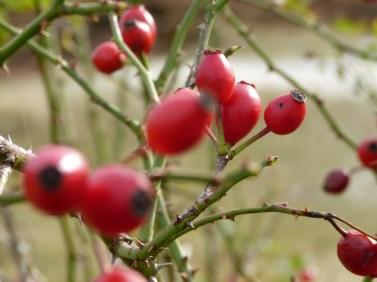 schoorl - red