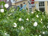 fiets & bloemen