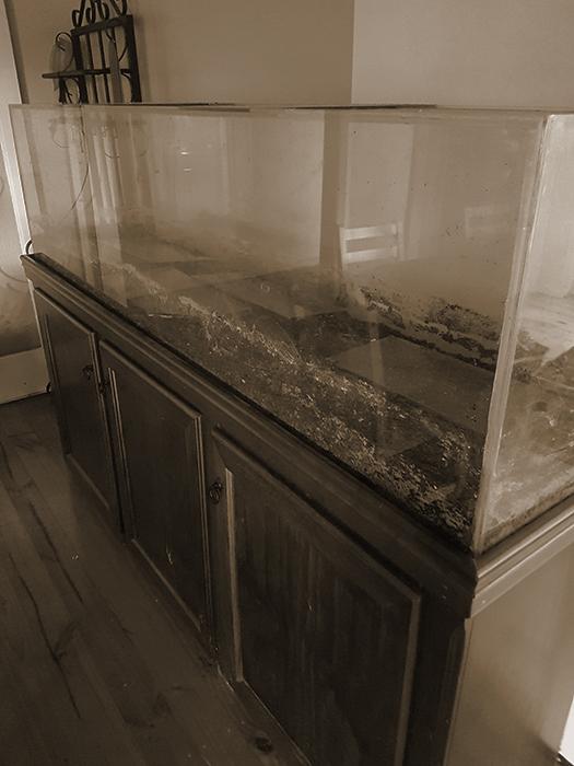 A Spooky Fish Tank