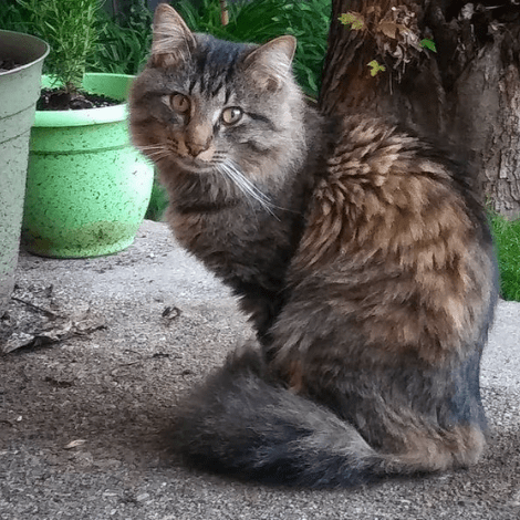 A very fluffy and handsome brown tabby cat sits on what appears to be a concrete porch outside. Plants in pots and a tree are visible. The cat is sitting with a fluffy tail wrapped around him, and he looks very cute.