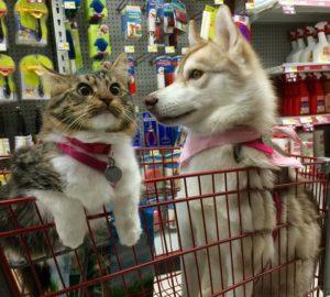 rosie-lilo-shopping