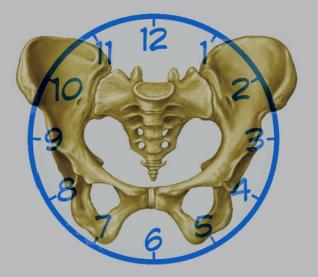 «Тазовый циферблат» упражнение для восстановления баланса всего тела
