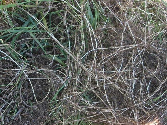 Травы, которые проникают в суставы и восстанавливают хрящи в несколько раз лучше химии!