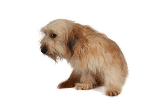 Anxious Scared Dog