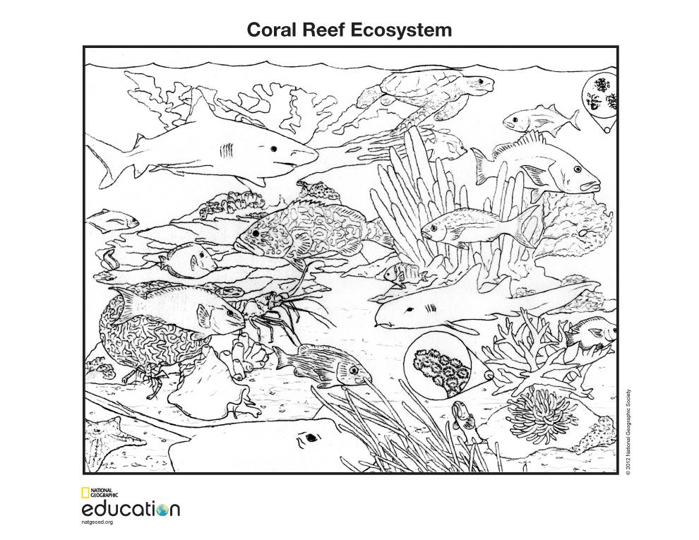 SCI:B15 Ecosystem / Biome / Habitat