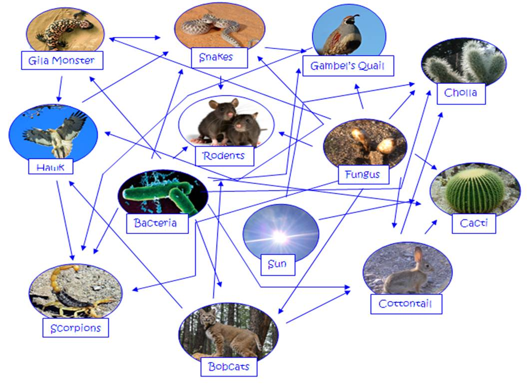 taiga food web diagram push button start wiring interaction with explanation sahara desert