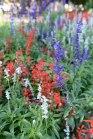 Civic park-flowers