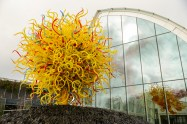 Chihuly Garden and Glass Exhibit 13