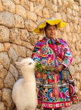 Alpaca Andean Lady from South of Cusco Peru