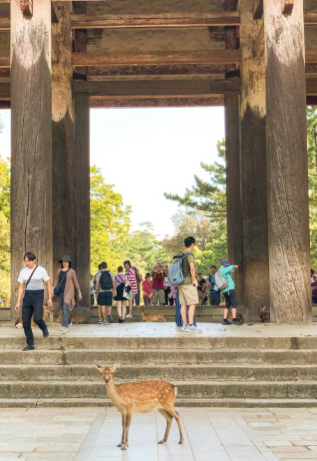 Todaiji Temple and its cute, free-roaming wild deer