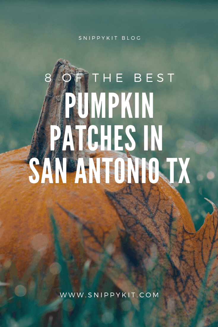 It is pumpkin patch season. Time to get the kids together and go out exploring Texas. Check this list of 8 best Pumpkin Patches in San Antonio Texas.