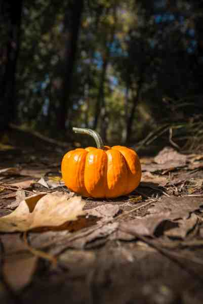 Capture the Pumpkin Halloween Game for kids