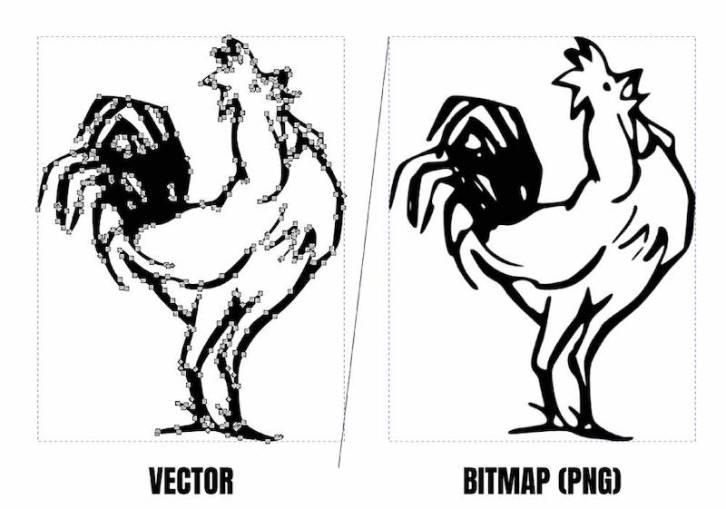 vector image vs bitmap image