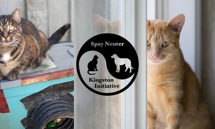 Spay Neuter Kingston Initiative