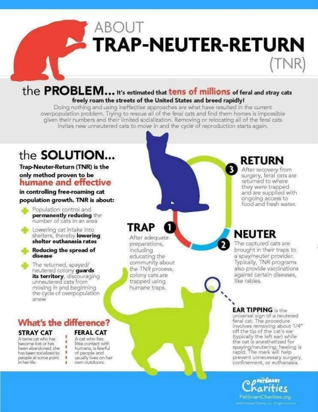 Spay Neuter Kingston Initiative TNVR