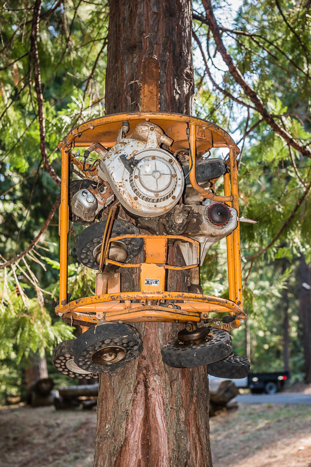 2015 logging jamboree sierra