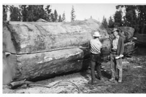 Spitting log with saw