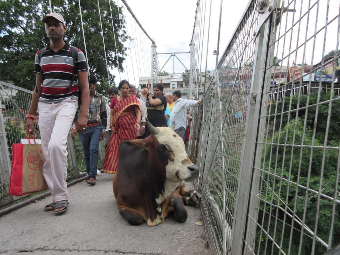 Fußgängerbrücke Rishikesh