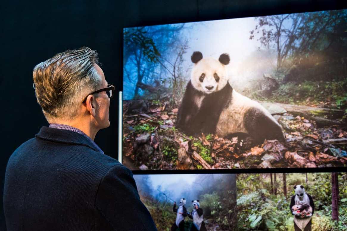 Ami Vitale und ihre Fotoserie über Große Pandas