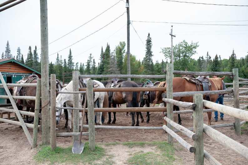 Die Pferde warten auf ihren Ausritt
