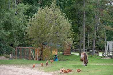 Ich erkunde die Ranch
