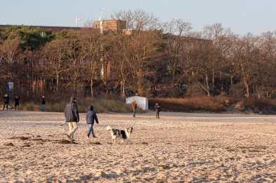 Hunde toben am Strand