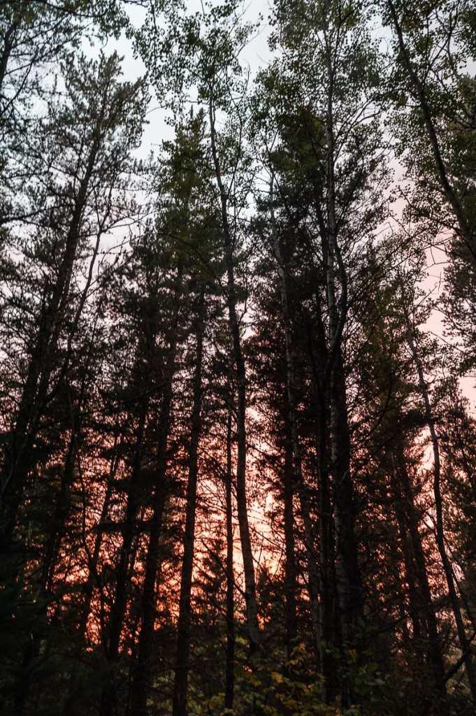 Dramatischer Sonnenuntergang hinter den Bäumen des Riding Mountain National Parks.