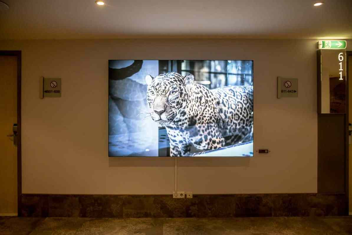 Leopard im 6. Stock des Mercure Hotel Berlin City