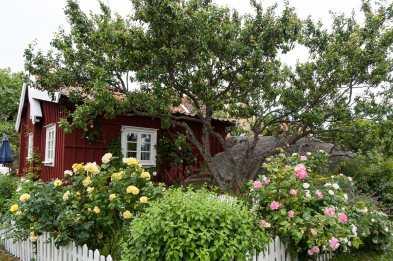 Idyllisches rot-weißes Holzhaus mit blühendem Vorgarten in Landsort