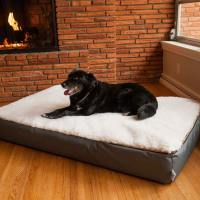 Super Orthopedic Lounge Dog Bed w/ Cream Sherpa | Snoozer