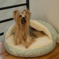 Snoozer Luxury Orthopedic Cozy Cave Dog Bed | Show Dog ...